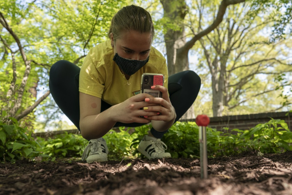 Virginia Borda gathers soil temperatures at eight inches below the surface as part of an undergraduate class project measuring soil temperatures to te...