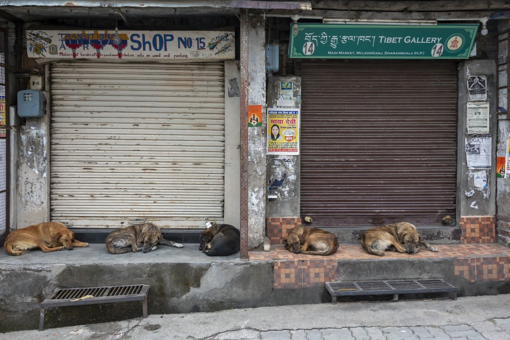 Street dogs sleep at a market as shops remain closed due to the COVID-19 pandemic in Dharmsala, India, Wednesday, May 5, 2021. India's government is f...