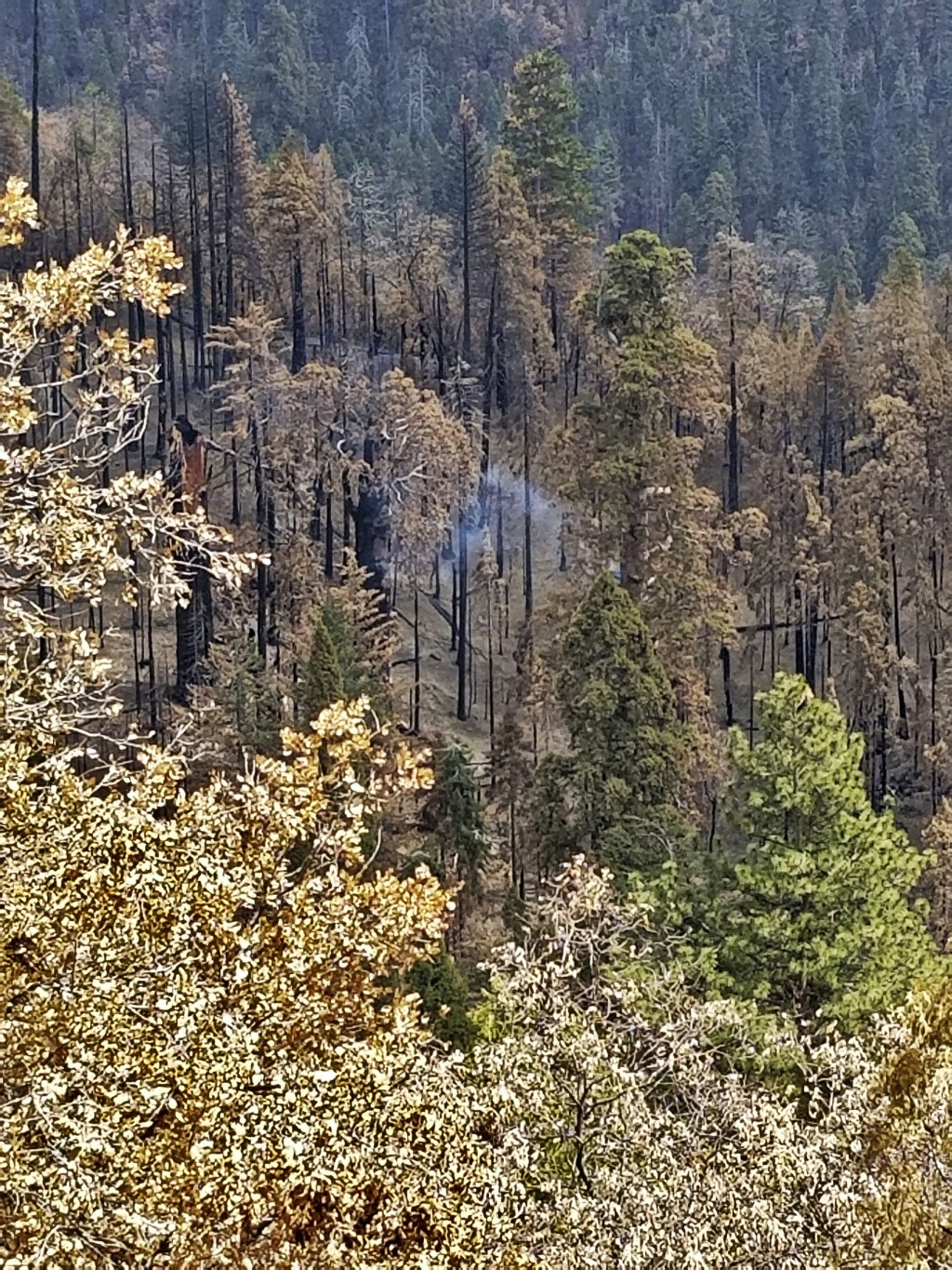 This photo provided by the National Park Service shows what appears to be a smoldering tree in Sequoia National Park, Calif., on April 22, 2021. A gia...