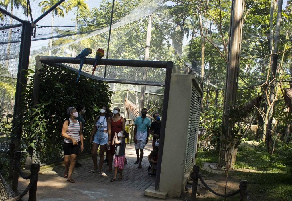 A pair of macaws perch on the top of a passageway as people visit the aviary at BioParque, in Rio de Janeiro, Brazil, Wednesday, May 5, 2021. Refauna,...