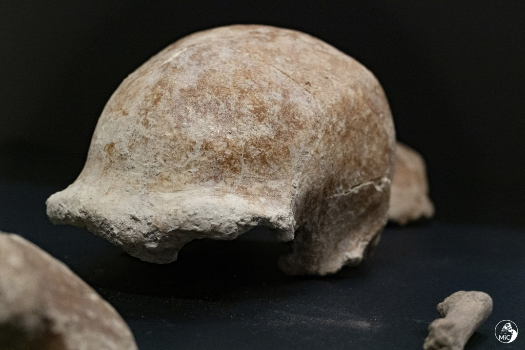 This image released by the Italian Culture Ministry shows fossil findings that were discovered  in a cave near Rome, shedding new light on how the Ita...
