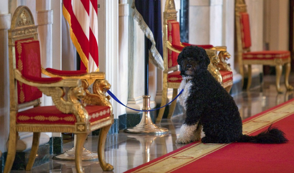 FILE - In this April 22, 2010, file photo Bo, the Obama's family pet, sits in the Cross Hall before an event with first lady Michelle Obama to welcome...