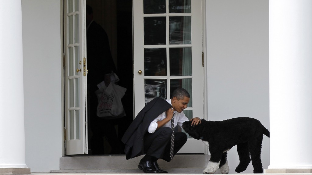 FILE - In this March 15, 2012 file photo, President Barack Obama pets the family dog Bo, a Portuguese water dog, outside the Oval Office of the White ...