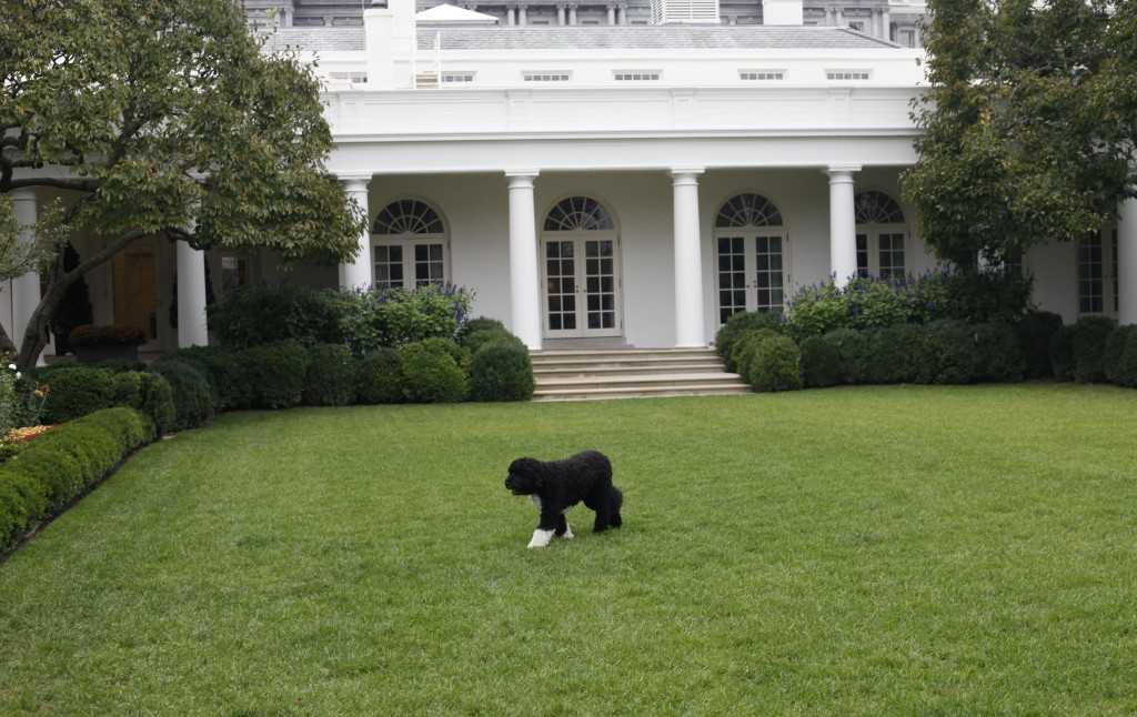FILE - In this Oct. 11, 2011, file photo Bo, the Obama family dog, walks in the Rose Garden of the White House in Washington. Former President Barack ...