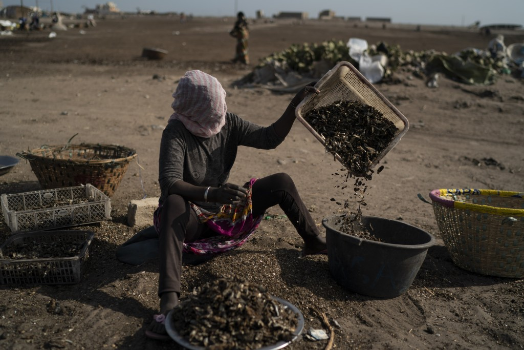 A woman works on a fish processing site on Bargny beach, some 35 kilometers (22 miles) east of Dakar, Senegal, Sunday April 25, 2021. (AP Photo/Leo Co...