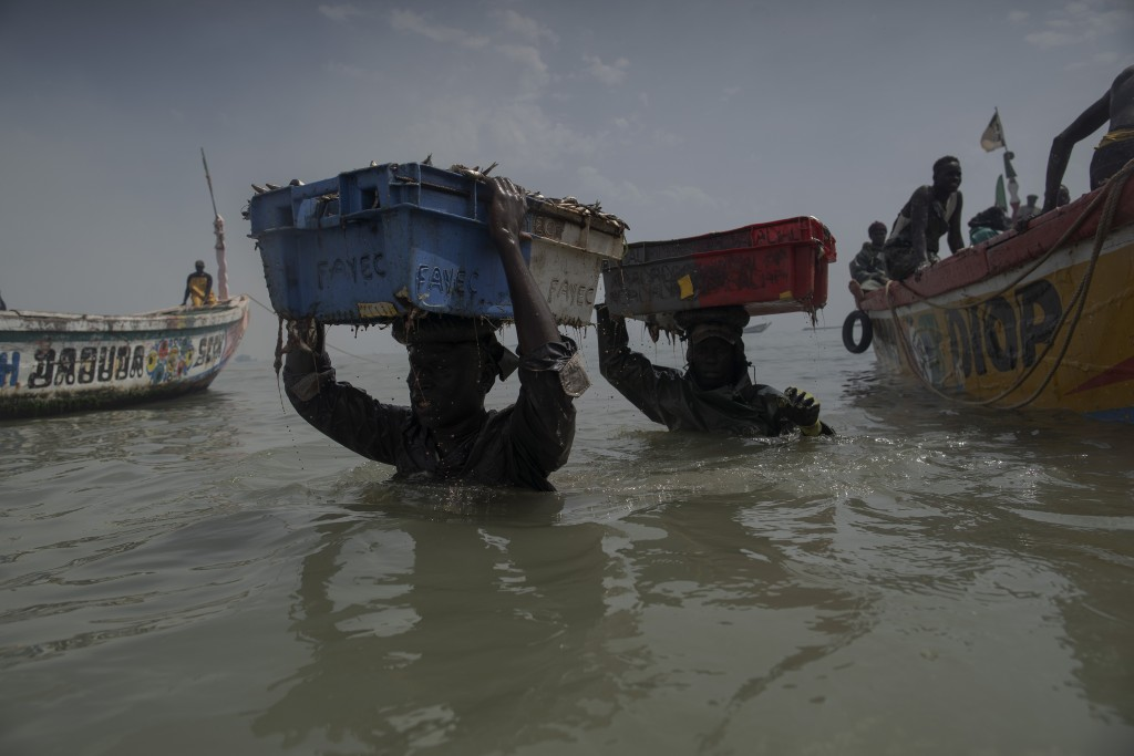Men wade through the water as they carry the fish cargo from the pirogues to the shore of Bargny beach, some 35 kilometers (22 miles) east of Dakar, S...