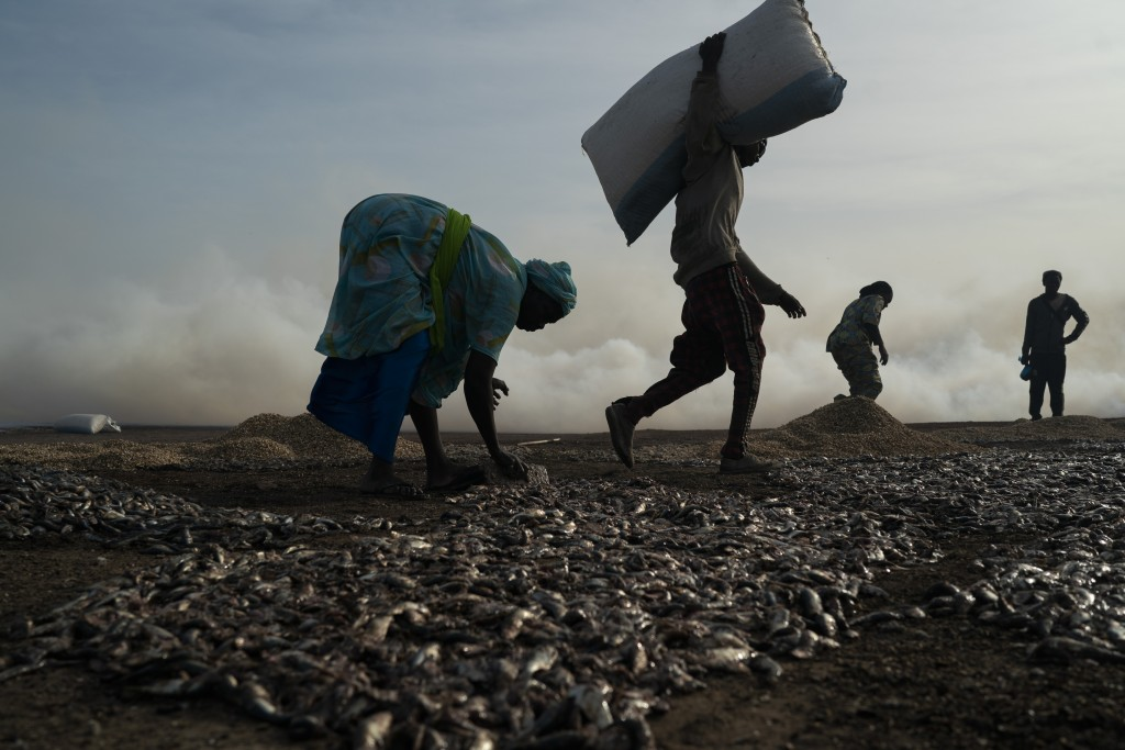 Ndeye Yacine Dieng, left, spreads the fish on the ground before processing it on Bargny beach, some 35 kilometers (22 miles) east of Dakar, Senegal, W...