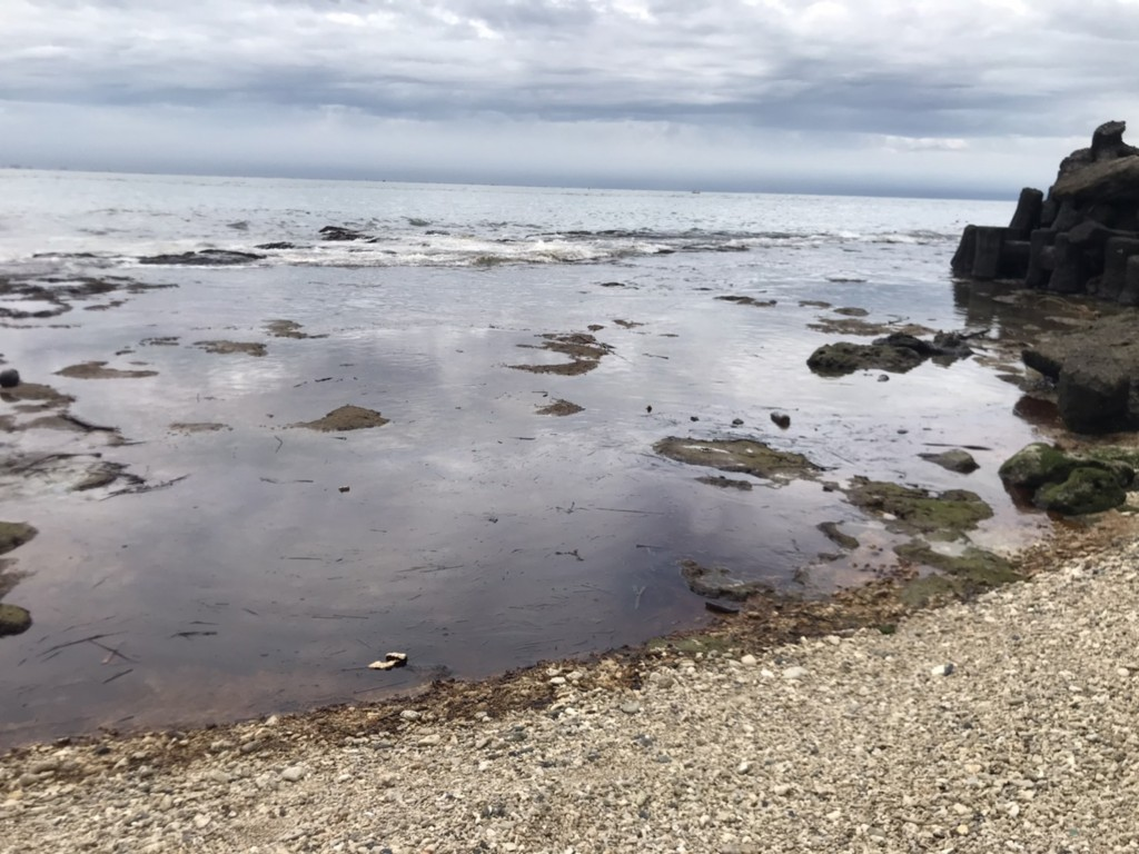 Oil spill hits Taiwan's Kenting, threatens wildlife
