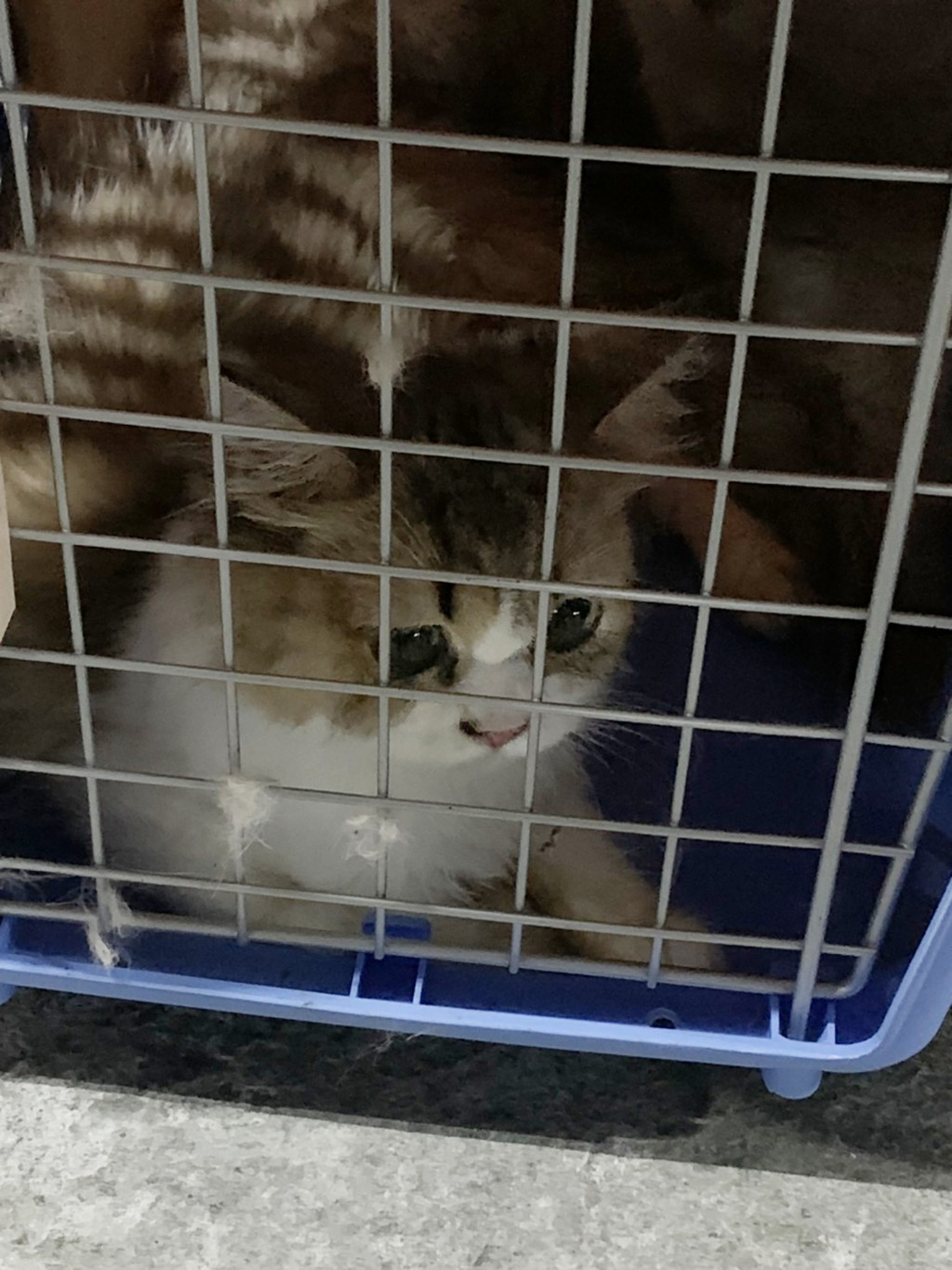 A kitten sits locked in a cage hours before it was put to death on Saturday (Aug. 22).
