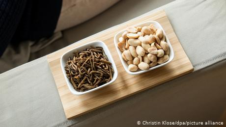 The darkling beetle larvae are already commonly used as food for pet reptiles and fish