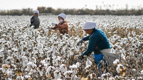 China is accused of forcing its Uyghur population to work in cotton fields