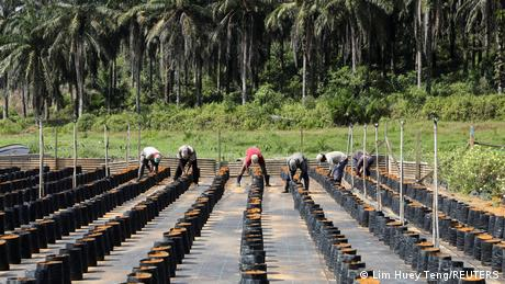 The main source of contention between Malaysia and EU surrounds Brussels' plans to phase out palm oil imports by 2030