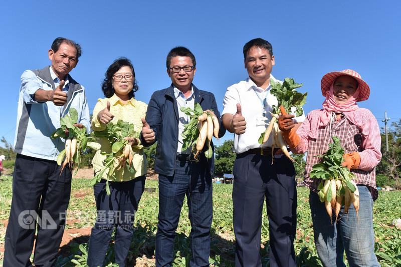 La saison des carottes blanches ou «Gû-khit-á luóbo» à Hengchuen