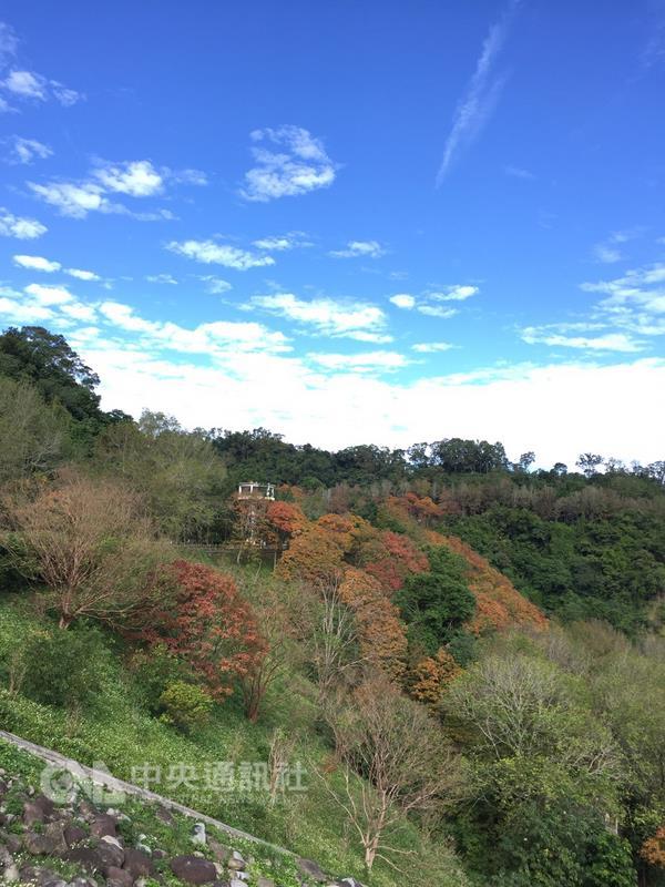 Agence des ressources en eau: c'est le meilleur moment pour regarder les feuilles d'érable rouges autour du réservoir Shihmen