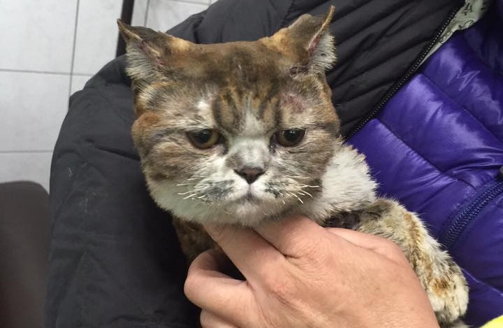 Photo of Duoduo, found after owner perished in fire searching for the cat. (Photo by Facebook group 貓咪也瘋狂俱樂部 CrazyCat)