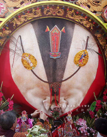 Controversial 'Holy Pig' festival kicks off in Sanxia