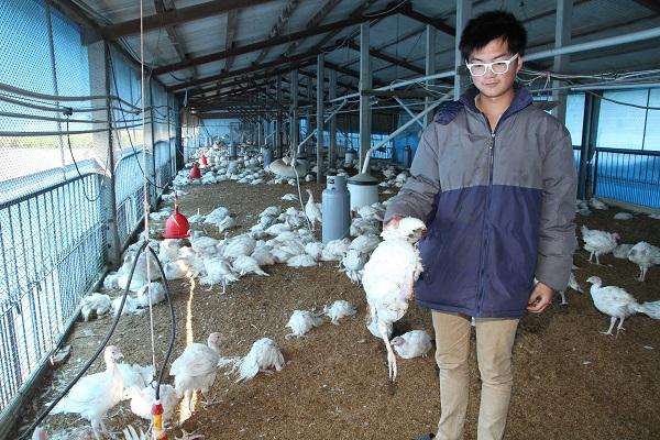 Taiwan reports more H5N6 bird flu cases