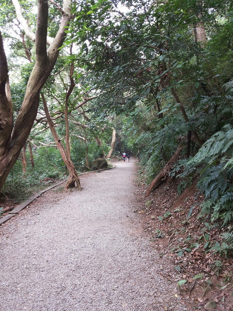 Tiammu Ancient Trail provides an easy getaway from the craziness and madness of life in Taipei as well as an alternative way to get up to the Yangming...