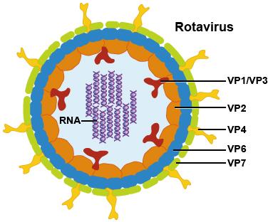 Taipei City will start subsidizing rotavirus inoculation for eligible infants, starting on April 5, 2017.
