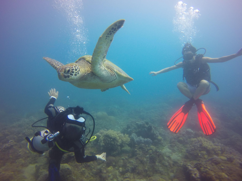 Divers swim with an adult green sea turtle in waters around the island of Xiaoliuqiu, southern Taiwan.