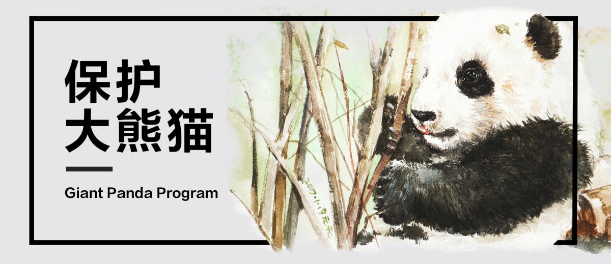 Illustration by WildAid China Volunteer Yuan Yuan