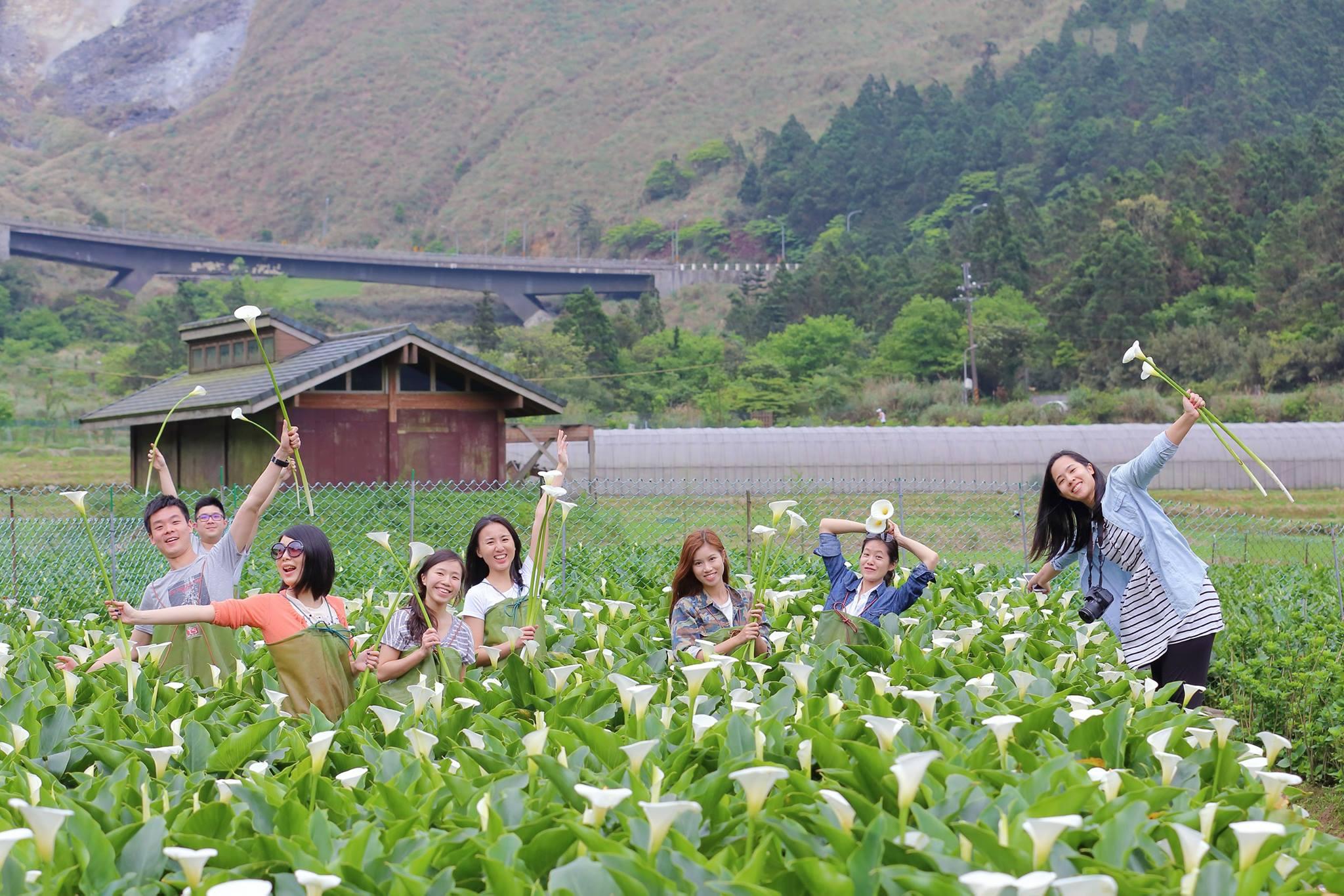 Des arums blancs de Zhuzihu(Photo / facebookde callalily.com.tw )