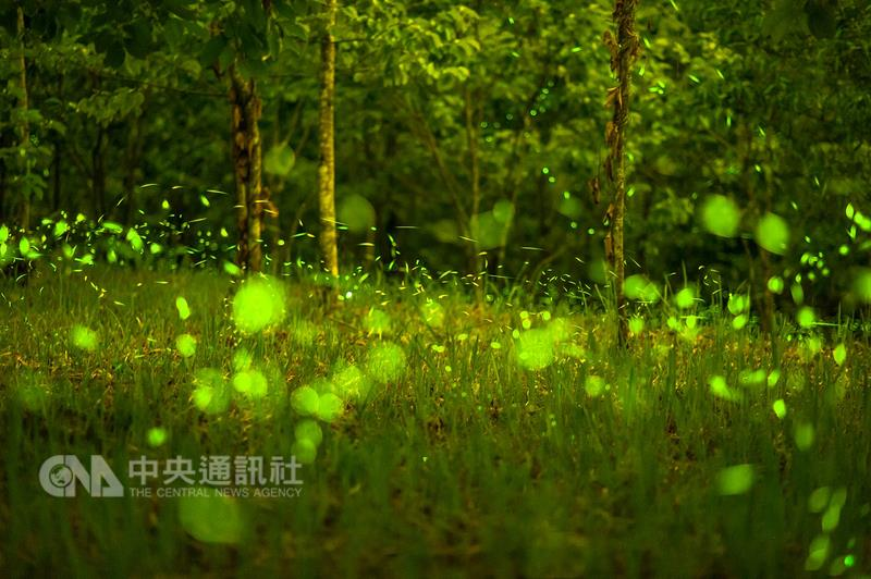 La saison des lucioles à Taipei Zoo