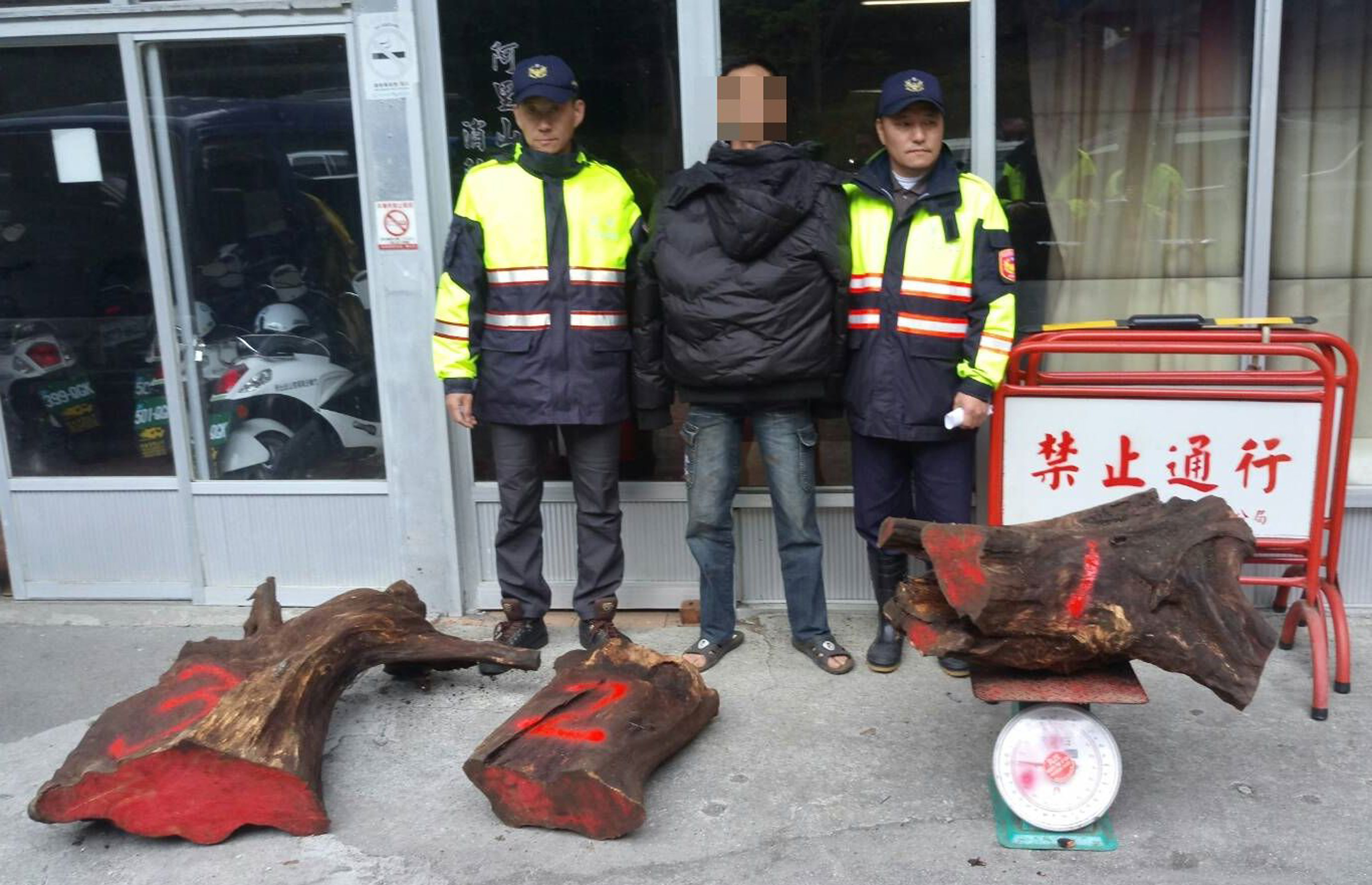 Chiayi County police arrested a man for illegal logging in Alishan (photo courtesy Chiayi County Police)
