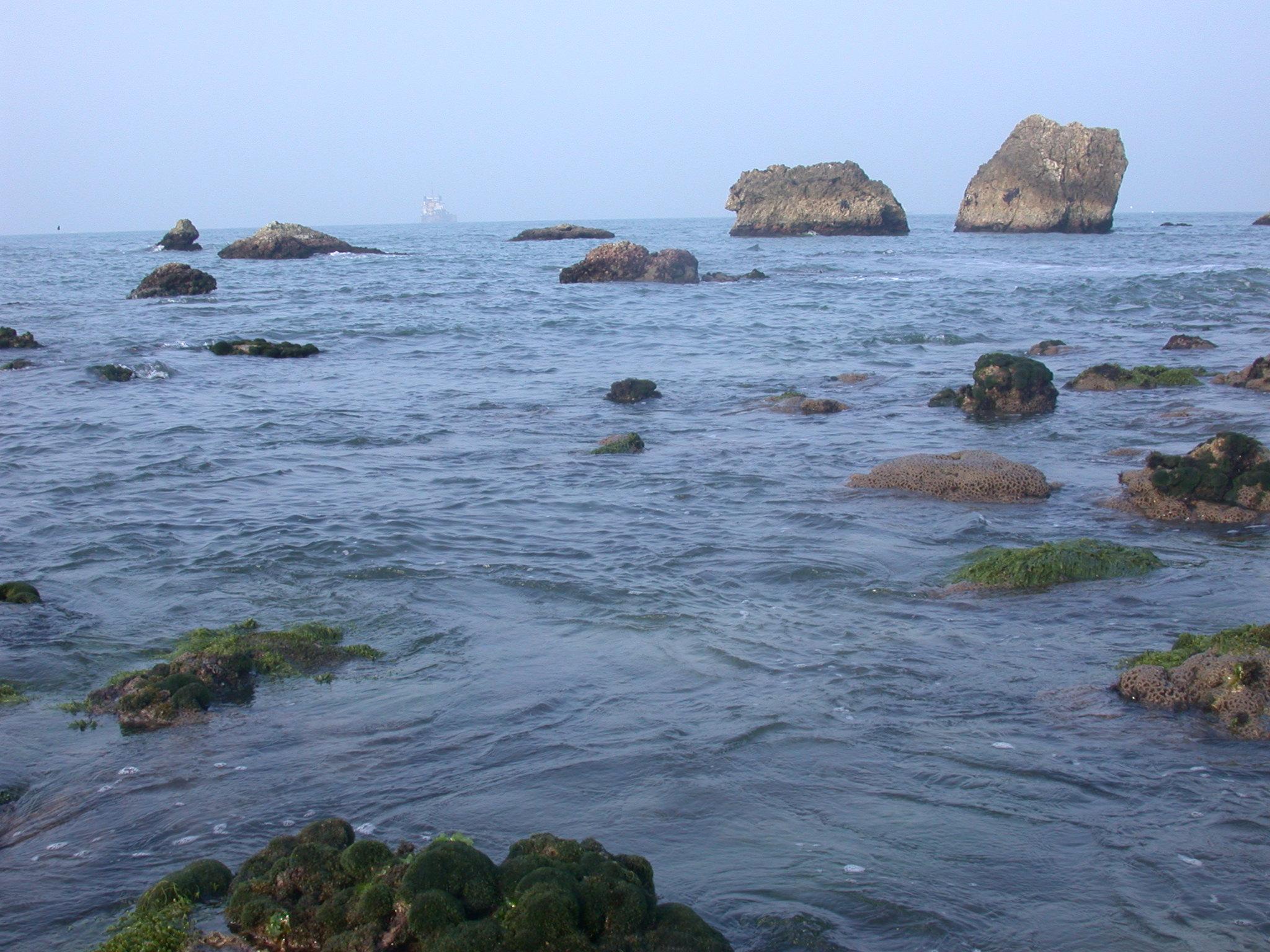 柴山多杯孔珊瑚在柴山海岸被發現-陳昭倫攝 林務局提供