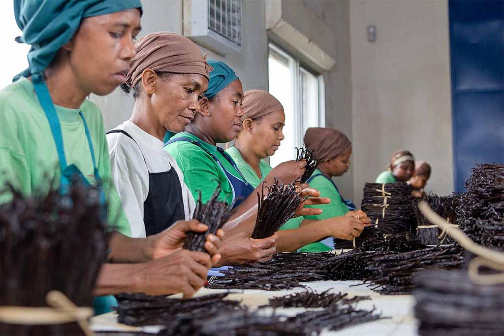 偷竊猖獗、中盤商剝削   揭露馬達加斯加的香草「不甜」