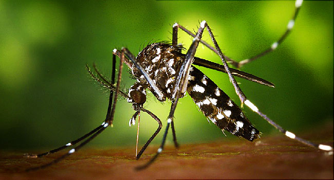 Taiwan's first imported Zika case this year reported