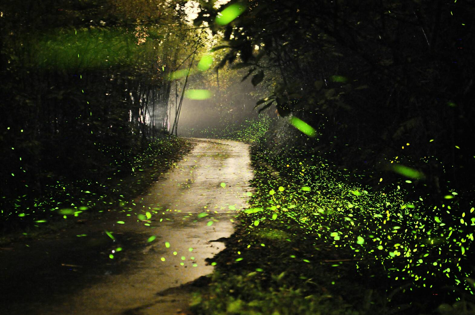 Map Of Best Firefly Viewing Spots In Taiwan Taiwan News - Fireflies map of us