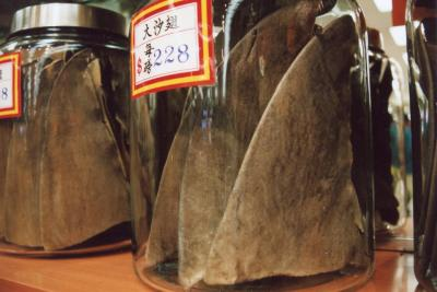 Four more Chinese airlines ban shark fin