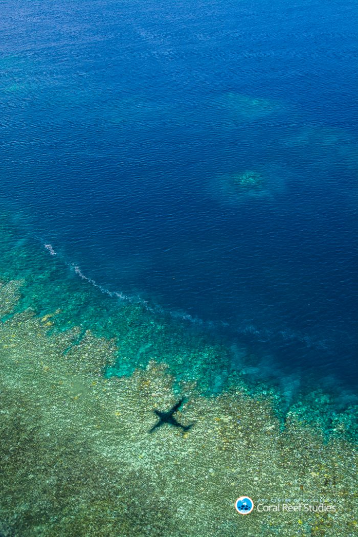 Coral bleaching in the Great Barrier Reef from the 2017 studies. Credit: Ed Roberts, ARC Centre of Excellence for Coral Reef Studies