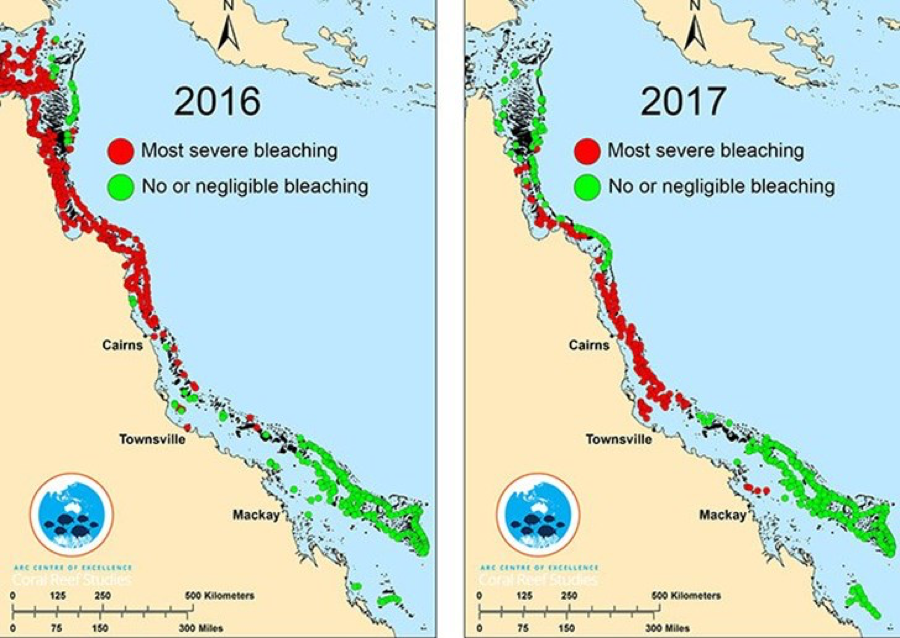 Coral bleaching in the Great Barrier Reef comparison between 2016 and 2017