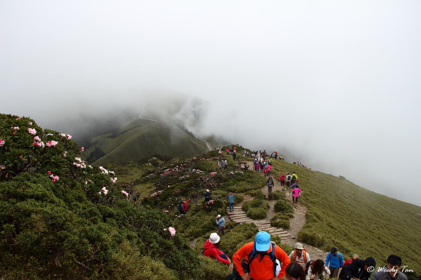 Hehuanshan East Peak (Image from Weedy Tan)