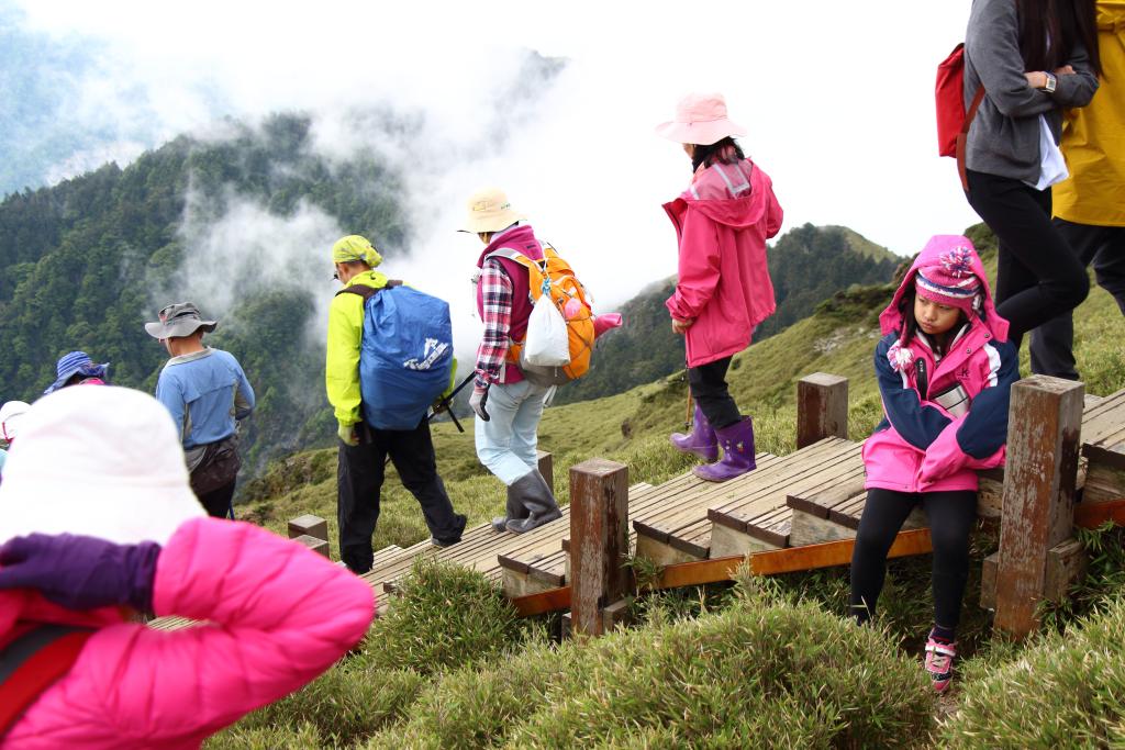 Azaleas on Hehuanshan East Peak in central Taiwan