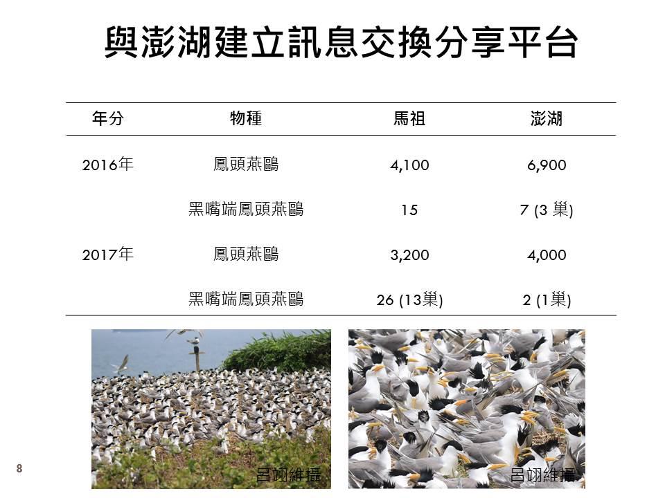 「神話之鳥」黑嘴端鳳頭燕鷗歷年統計數 (圖片由林務局提供)