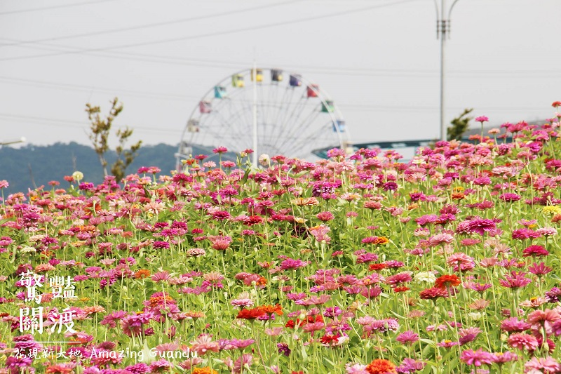A dazzling sea of flowers near a riverside park in Taipei's Beitou District will be inaugurated at a ceremony with music and dance performances at 4 p...