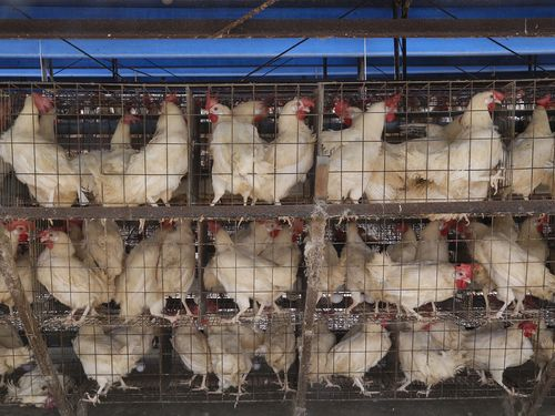 Eggs at 44 farms in Taiwan found with excessive insecticide levels
