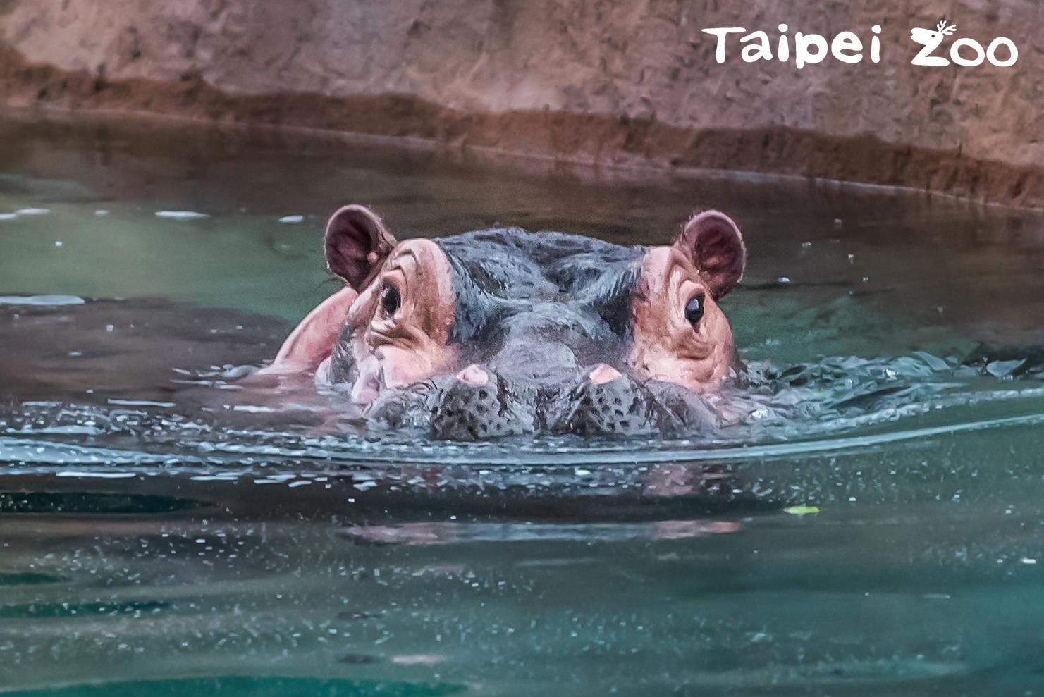 翻攝臺北市立動物園臉書專頁