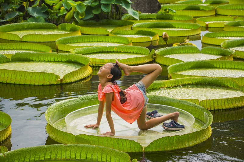 Giant water lilies exhibition in Taipei extended to September 30