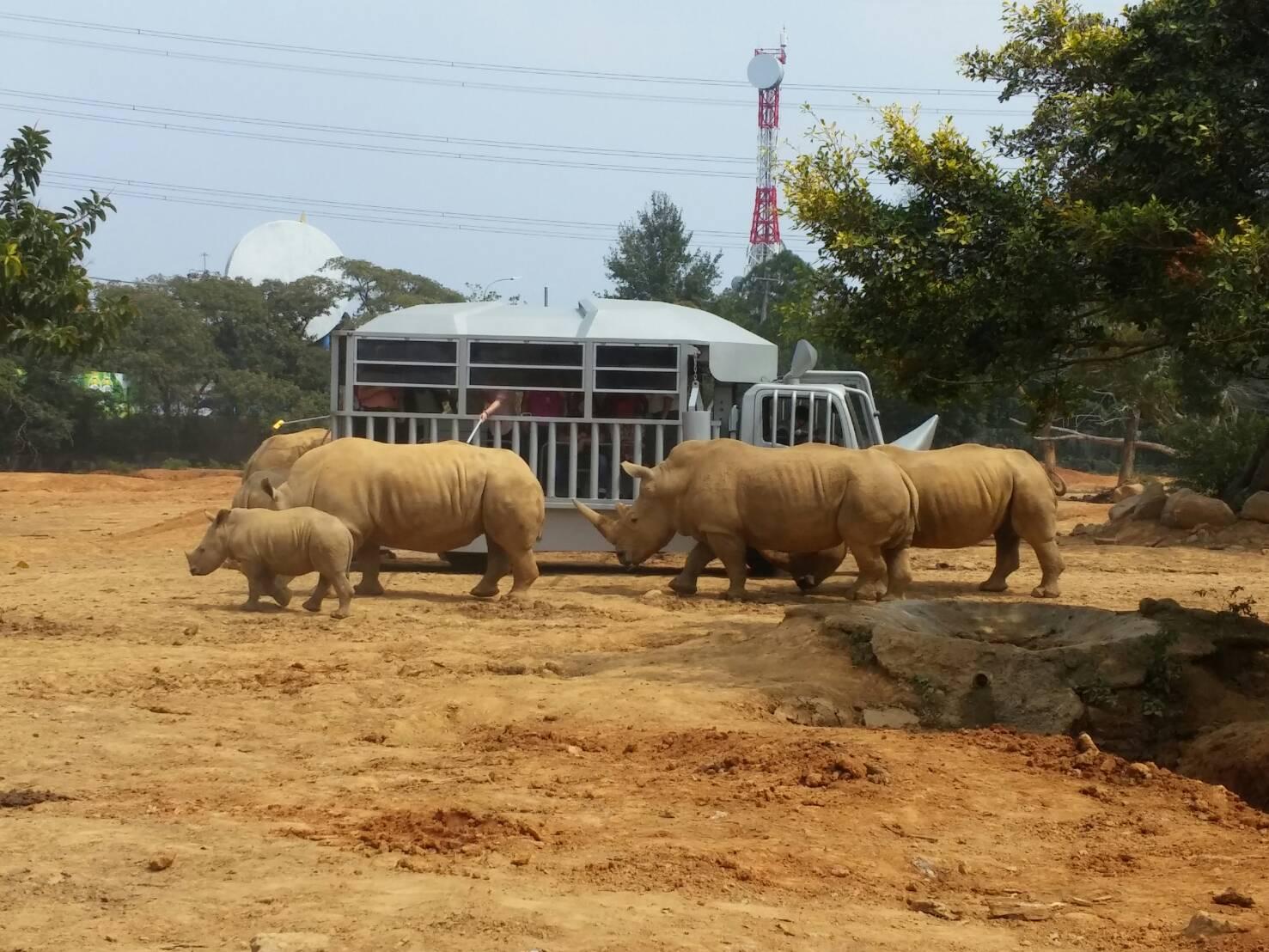 莊福文教基金會從1979年六福村主題遊樂園開幕迄今,積極投入白犀牛復育工作,園區現存19隻白犀牛,繁殖復育成果傲視亞洲。