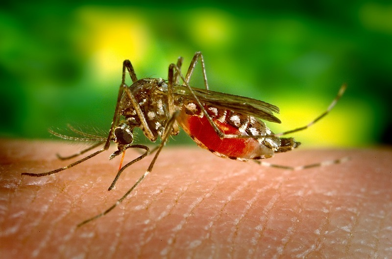 The Taiwan Centers for Disease Control announced on Monday one new dengue-associated death in an imported case. (photo from Pixabay)