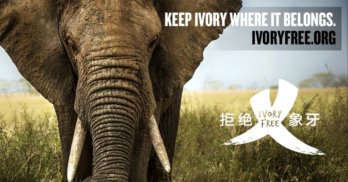 圖片由野生救援WildAid提供
