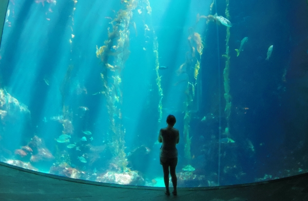 National Museum of Marine Biology & Aquarium. (Wikimedia Commons)