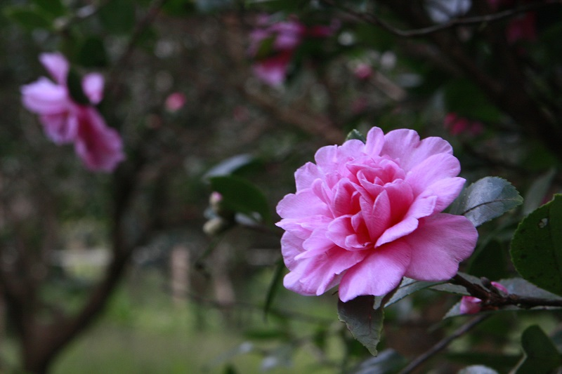 In fact, the center has many different flowering trees and shrubs and is suitable for tourists to visit and appreciate different plants all year round