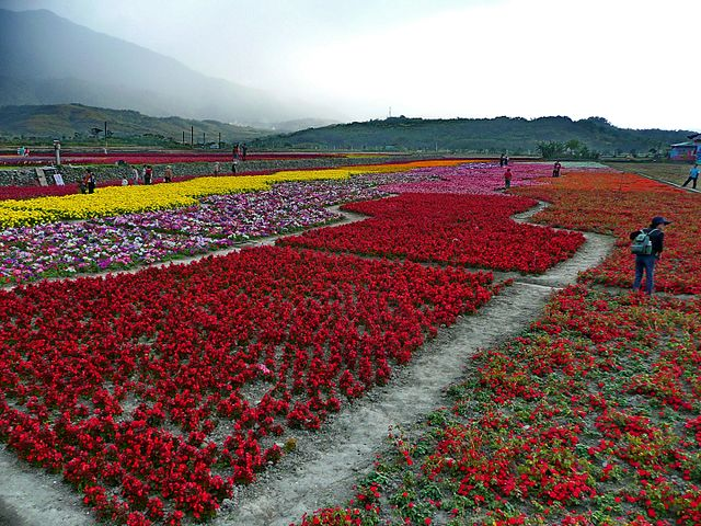 Flower Carpet in Fuli Township, Hualien taken December 2008