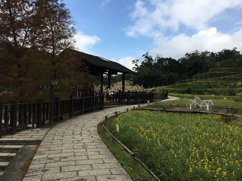 Come to Maokong to appreciate a sea of dull-ice flowers along the Camphor Tree Trail (photo courtesy of GEO)