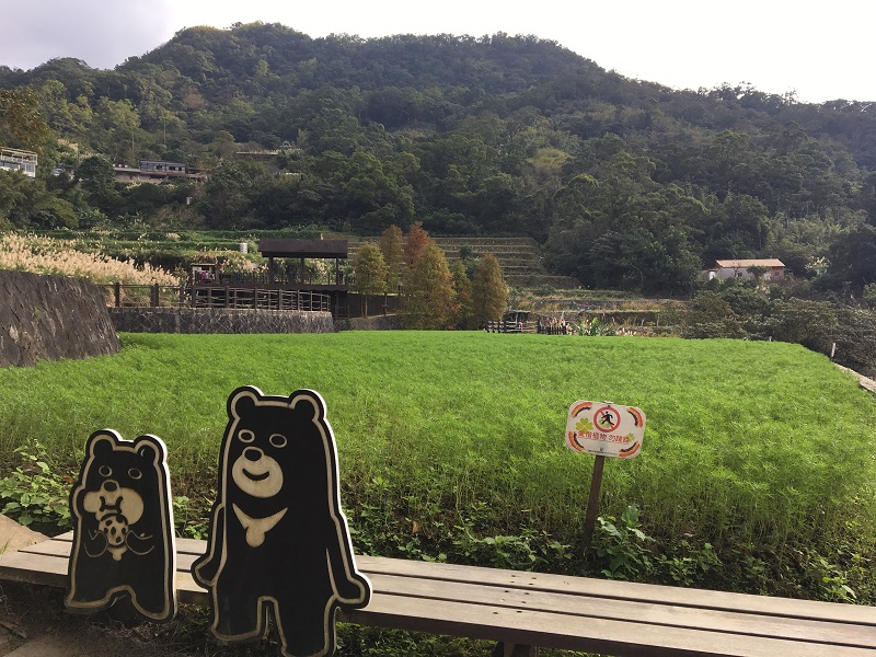 Come to Maokong, Taipei to appreciate flowers along Camphor Tree Trail during New Year holiday